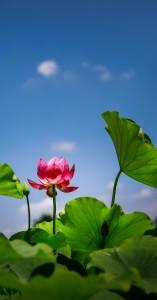 flower-1490276_1920